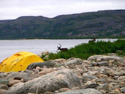 Caribou at Goodbye Rapid
